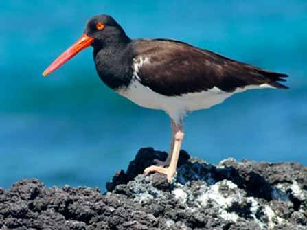 Ave de las Galápagos