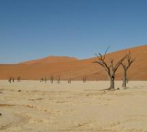 La tela de atrapar la niebla podría mejorar la recolección de agua en los desiertos
