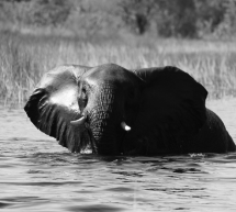 La Comisión lanza una consulta sobre el modo en que la UE puede combatir el tráfico de especies silvestres