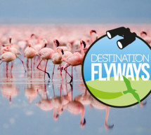 La OMT propone destinos de observación de aves migratorias y contribuir a la conservación de la biodiversidad