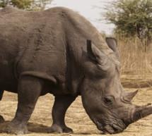 La OMT, la UNODC y ministros de Turismo africanos suman fuerzas contra la caza furtiva
