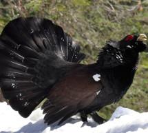 La Fundación Biodiversidad  contribuye a la preservación de más de 50 especies amenazadas