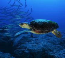 El MAGRAMA participa en más de 60 iniciativas para la conservación del medio marino