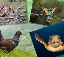 Se celebra el Día Internacional de la Diversidad Biológica