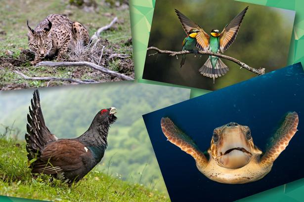 FUNDACION BIODIVERSIDAD. Día Internacional de la Diversidad Biológica