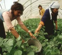 El Ministerio de Agricultura, Alimentación y Medio Ambiente otorga los Premios de Excelencia a la Innovación para Mujeres Rurales 2015