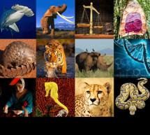 La Comisión Europea lanza un Plan de Acción para acabar con el tráfico de especies silvestres