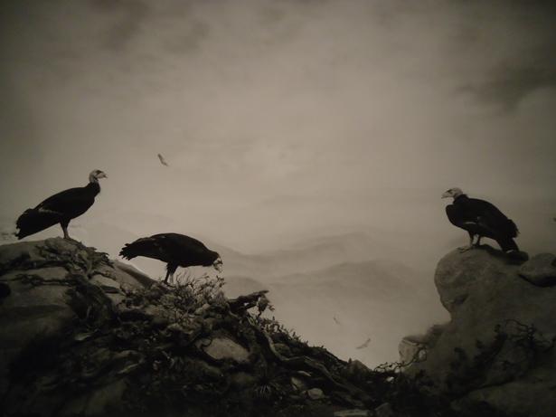 Fundación MAPFRE muestra en Madrid la fotografía de Hiroshi Sugimoto