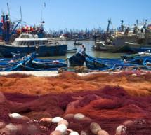 España es elegida miembro del Buró del Comité de Pesquerías de la FAO