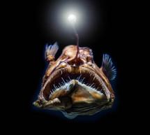El patrimonio mundial de alta mar: una idea que se abre camino en la UNESCO
