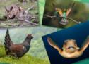 La Fundación Biodiversidad, premiada por su labor en materia de custodia del territorio