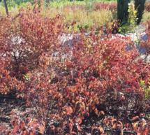 El profesor Gerá de la UAH explica por qué se caen las hojas en otoño