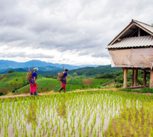 La UNESCO muestra en la COP22 cómo los conocimientos indígenas pueden contribuir a luchar contra el cambio climático