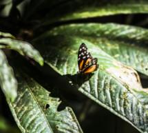 Perú, un destino único para la observación de animales
