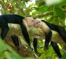 23 nuevas reservas de biosfera en la Red Mundial de la UNESCO