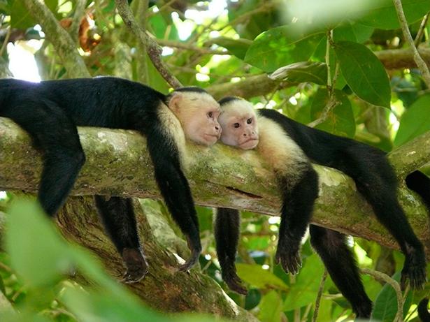 UNESCO. Reserva de Biosfera de Savegre (Costa Rica)