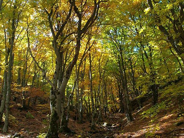 El Comité del Patrimonio Mundial de la UNESCO aprueba la inscripción de tres sitios naturales y la extensión de otro