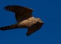España aprueba el Plan de Acción contra el Tráfico Ilegal y Furtivismo Internacional de Espacies Silvestres